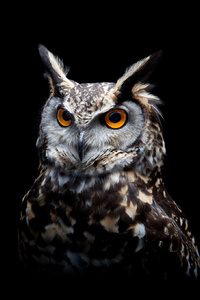 750x1334 Owl Dark Background