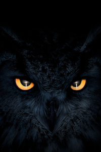 750x1334 Owl Dark Glowing Eyes