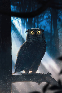 1440x2960 Owl Glowing Eyes Forest 4k