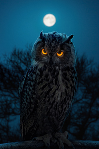1440x2960 Owl Glowing Eyes