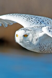 640x1136 Owl Predator