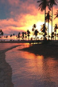 240x400 Palm Trees Sunset Sea