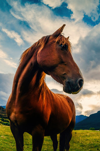 1080x2280 Paradise Horse 5k