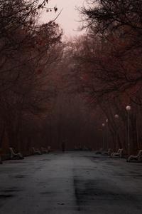 640x1136 Park Fog Evening