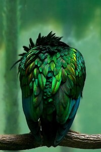 Parrot Beautiful Art