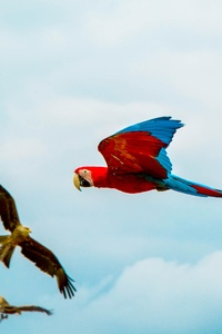1080x2160 Parrot Birds Flying 4k