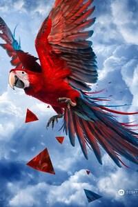 640x1136 Parrot Blue Sky