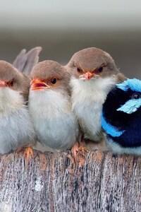 540x960 Passerine Birds