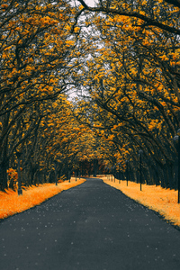 1242x2688 Paved Road Autumn 4k