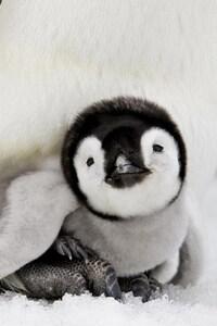Penguin Baby