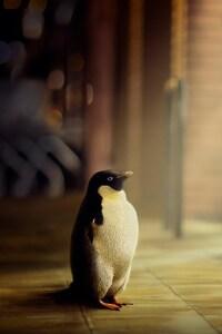 540x960 Penguin Hope