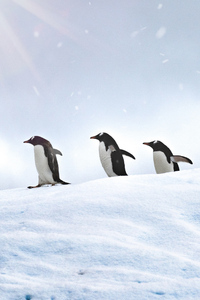 320x480 Penguins Walking