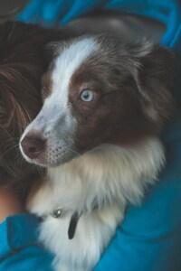 1125x2436 Pet Dog