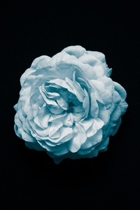 1080x2280 Petal Flower Oled 4k
