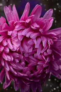 540x960 Pink Color Flower Bokeh