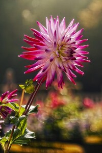 Pink Flower Macro