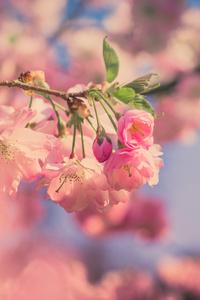 Pink Flowers 5k