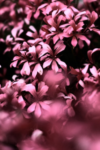1440x2560 Pink Flowers Ultra Hd Blur 4k