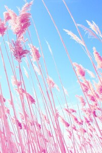 480x854 Pink Grass On Fields
