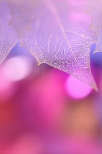 1080x2160 Pink Leaf Macro