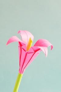 480x800 Pink Petaled Flower 5k