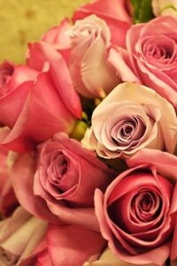 320x480 Pink Roses Bouquet