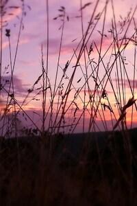 Pink Sky Nature