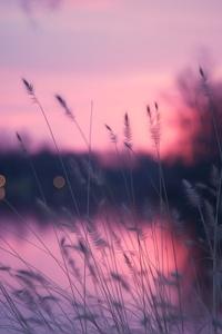 Plants Spike Lake Reeds 4k