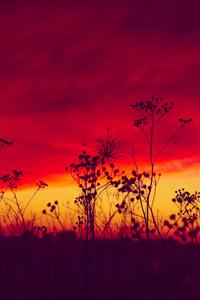 640x1136 Poland Sunset 5k