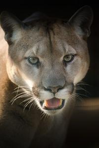 1080x2280 Puma Predator 5k