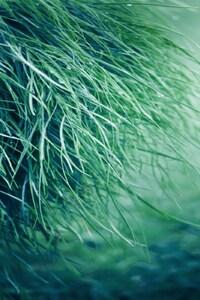 Pure Grass