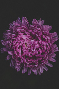 320x480 Purple Flower Blossom 5k