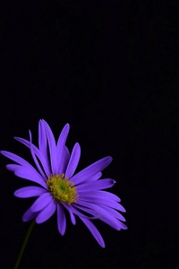 320x480 Purple Flower Blossom