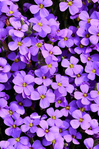 480x854 Purple Flowers Background 5k