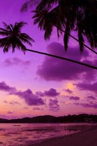 240x400 Purple Palm Tree