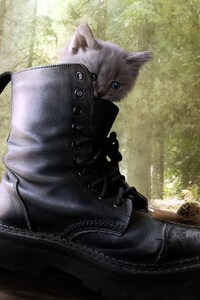 Puss In Boots 2 Movie