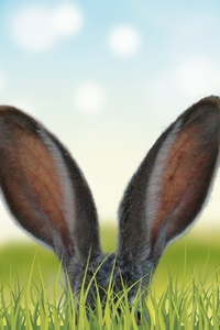 540x960 Rabbit Ears In The Grass 5k
