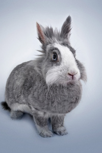 Rabbit Portrait 5k