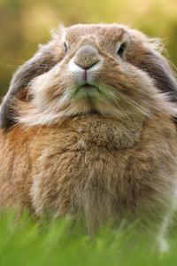1080x2280 Rabbit
