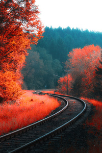 Railway Autumn Forest