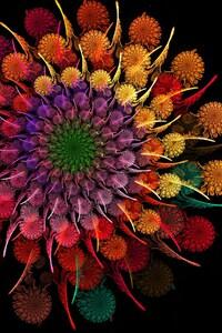 1440x2560 Rainbow Flower