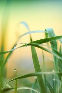 Raindrop Grass Plant 5k