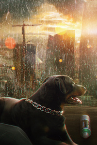 240x400 Rainy Mood Dog Boy Photo Manipulation