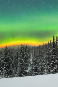 320x480 Rare Orange Aurora Above A Snowy Forest 5k