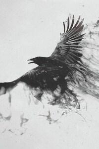 1440x2560 Raven Bird Art