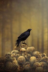 Raven Sitting On Skulls