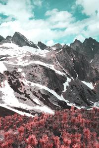 480x800 Red Flower Field Autumn In Mountains 4k