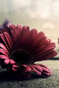 1440x2560 Red Flower