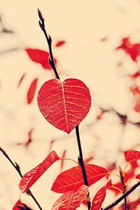 1080x2280 Red Leaf Nature