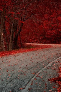 640x960 Red Leaves On Road Autumn Season